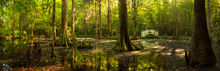 Marvelous Light, Charleston, South Carolina, Magnolia, plantation, gardens, marsh, swamp, panoramic, focus stack, bernard chen