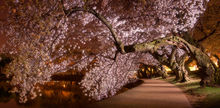 Washington DC, cherry blossom, blossoms, tidal basin, spring, april, pink, solitude, walkway, quiet, bernard chen, timescapes
