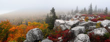 Please Let Me Be, Dolly Sods, West Virginia, Bear Rocks Preserve, autumn, fall, colors, panoramic, crimson red, rock, fog, mist, morning, bernard chen, timescapes