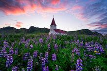 Vik i Myrdal Church, Iceland, Lupines, Sunrise, Flowers, Church, Bernard Chen