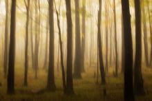 Light and Wilderness