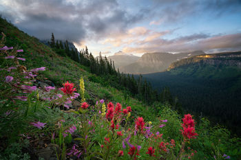Glacier National Park, Montana, National Park, Sunrise, Flowers, Clouds, Mountains, Solitude, Color, Going to the Sun Road, Glacier, Bernard Chen, Timescapes
