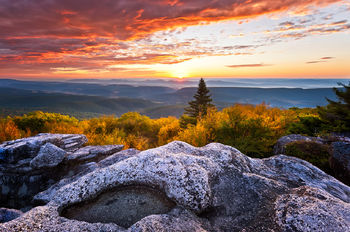West Virginia, Bear Rocks, Dolly Sods Wilderness, Canaan Valley, Hemlock, Mountain Laurel, Dolly Sods, Allegheny Mountains, Bear Rocks Preserve, Monongahela National Forest, Foggy Morning, Fog, Sun