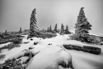 West Virginia, Bear Rocks, Dolly Sods Wilderness, Canaan Valley, Hemlock, Mountain Laurel, Dolly Sods, Allegheny Mountains, Bear Rocks Preserve, Monongahela National Forest, Foggy Morning, Fog, Snow,