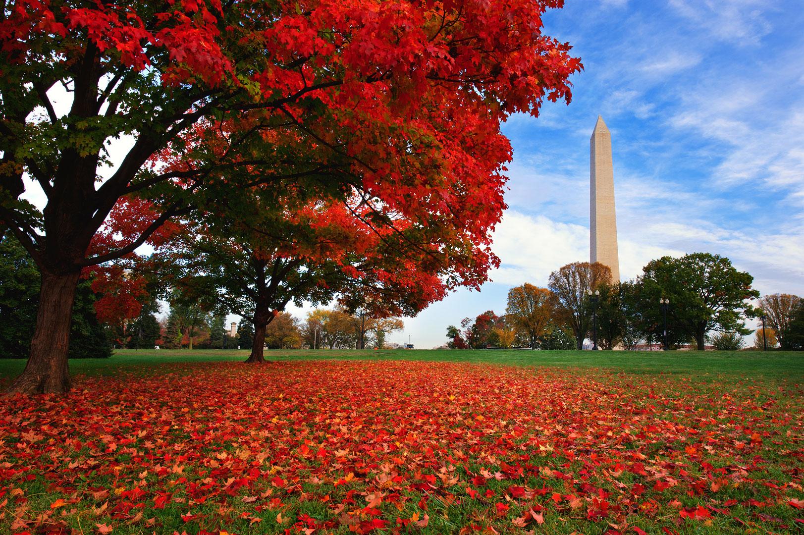 Washington DC, Washington Monument, Autumn, Fall Season, Color, Red Maple, Blue Skies, District of Columbia, Tidal Basin, photo