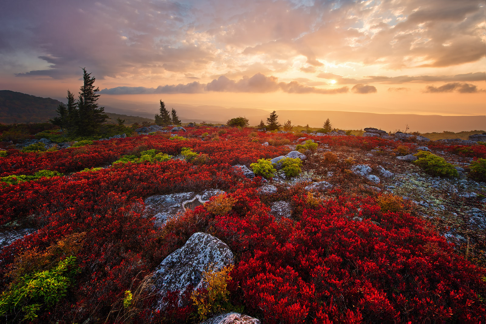 West Virginia, Bear Rocks, Dolly Sods Wilderness, Canaan Valley, Hemlock, Mountain Laurel, Dolly Sods, Allegheny Mountains, Bear Rocks Preserve, Monongahela National Forest, Foggy Morning, Fog, Sun, photo