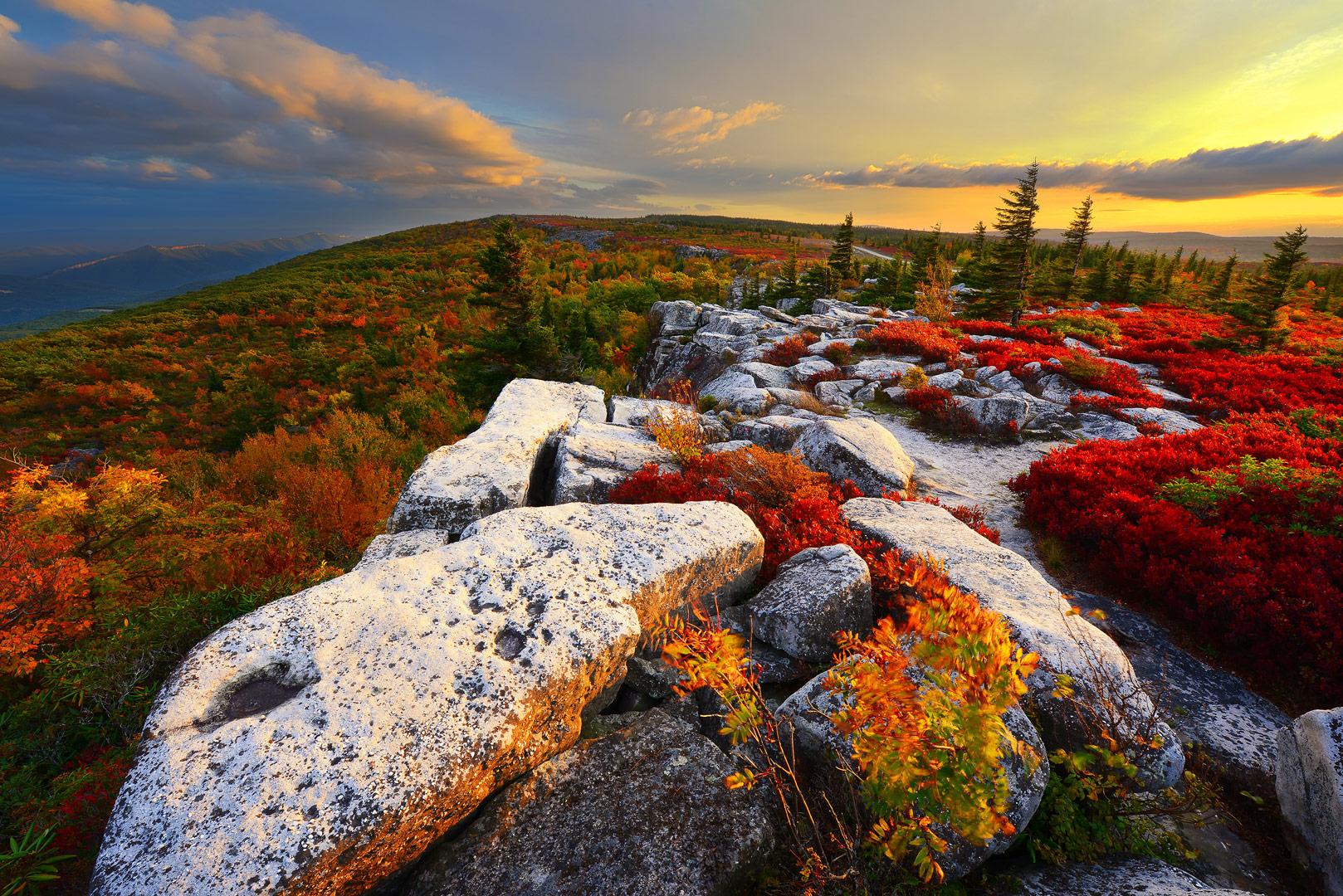 West Virginia, Bear Rocks, Dolly Sods Wilderness, Canaan Valley, Hemlock, Mountain Laurel, Dolly Sods, Allegheny Mountains, Bear...