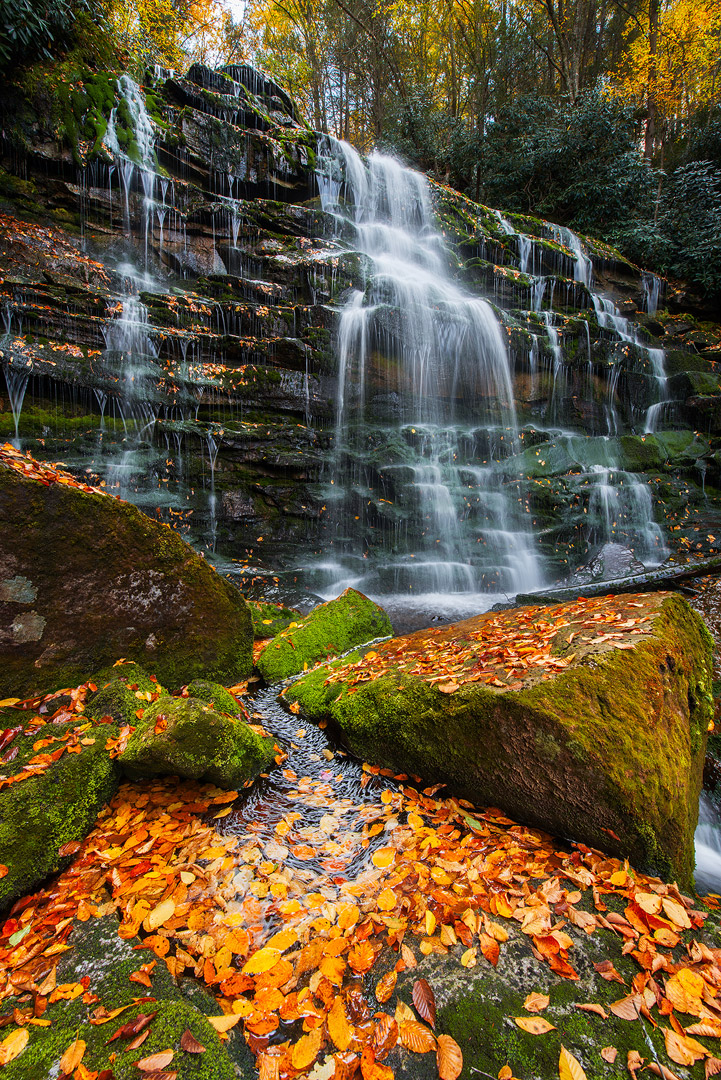 West Virginia, Blackwater Falls, Blackwater Falls State Park, Blackwater Canyon, Day, No People, Tree, Motion, Rapid, Force...