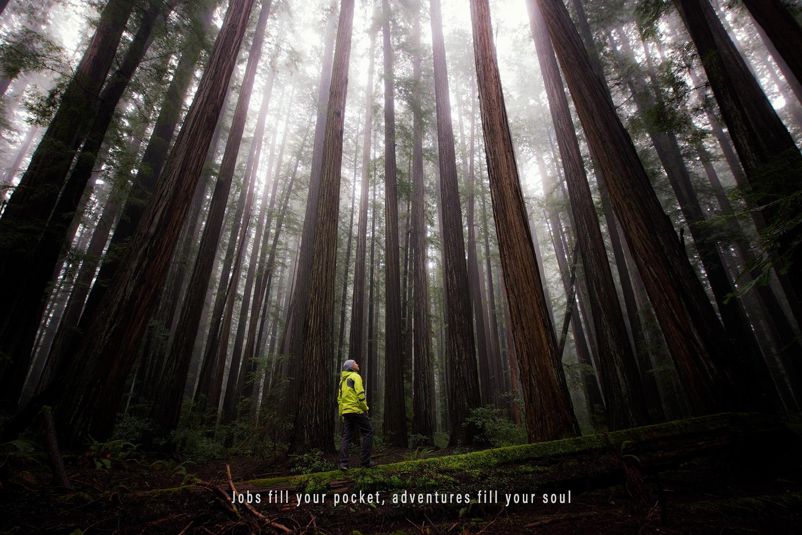 Humboldt Redwoods State Park, California, Giant Redwoods, Redwoods, Trees, Amazing Trees, Oldest Trees, Bernard Chen, photo