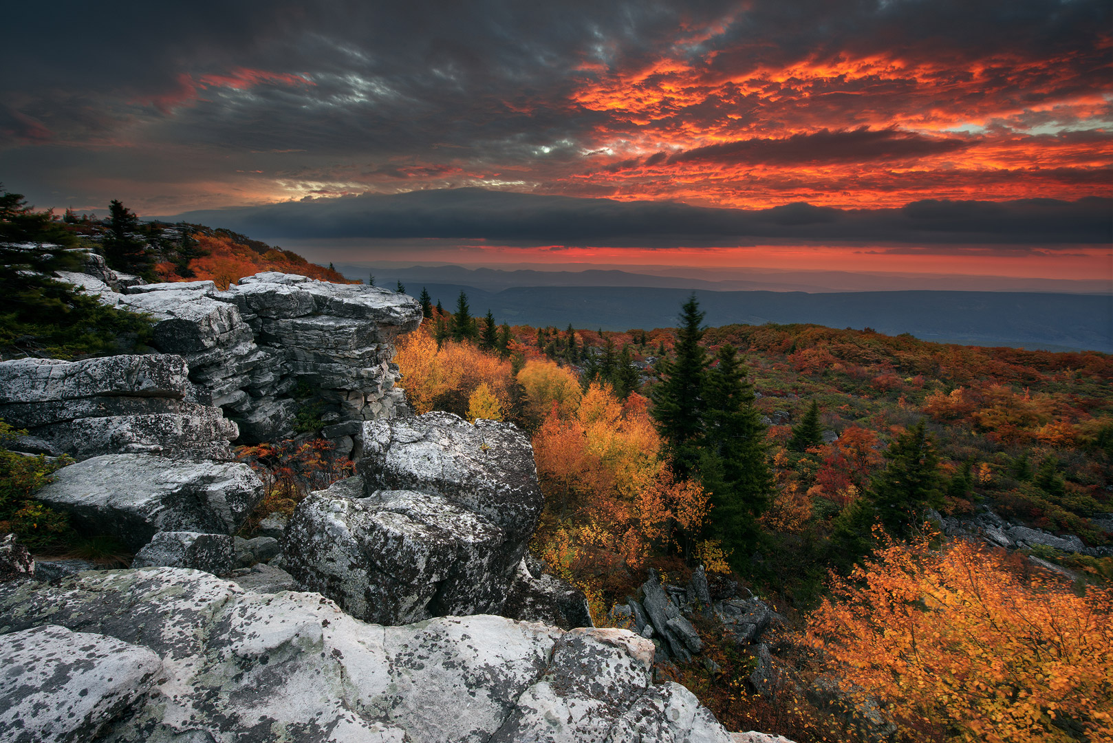 Rhododendron, Ferns, West Virginia, Bear Rocks, Dolly Sods Wilderness, Canaan Valley, Hemlock, Dramatic Sky, Dolly Sods, Allegheny Mountains, Bear Rocks Preserve, Monongahela National Forest, photo