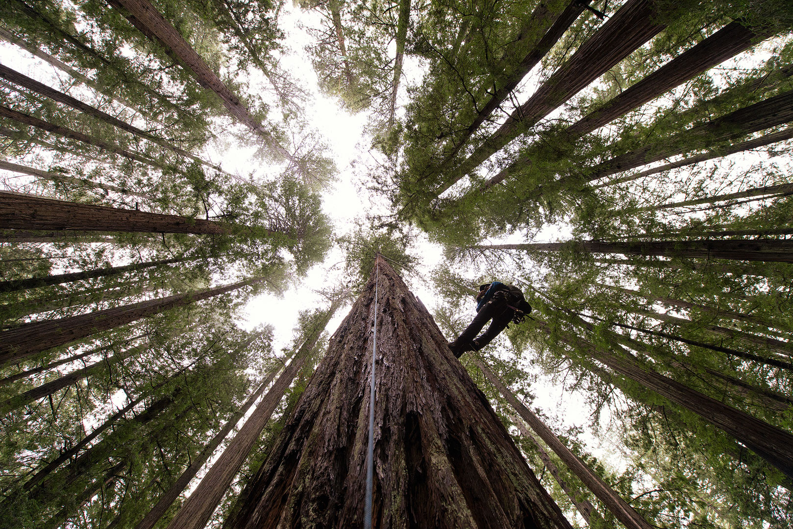 Humboldt Redwoods State Park, California, Giant Redwoods, Redwoods, Trees, Amazing Trees, Oldest Trees, Bernard Chen, photo