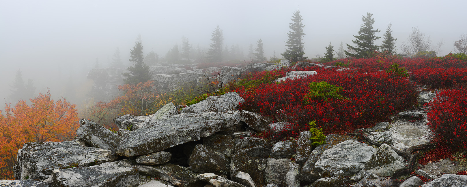 Please Let Me Be, Dolly Sods, West Virginia, Bear Rocks Preserve, autumn, fall, colors, panoramic, crimson red, rock, fog, mist, morning, bernard chen, timescapes, photo