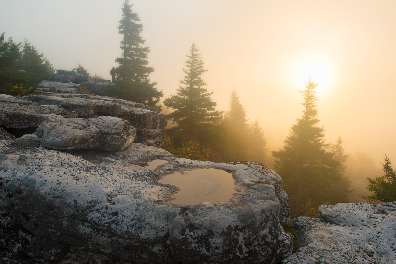 West Virginia, Bear Rocks, Dolly Sods Wilderness, Canaan Valley, Mountain Laurel, Dolly Sods, Allegheny Mountains, Bear Rocks Preserve, Monongahela National Forest, Foggy Morning, Fog, Sun, photo