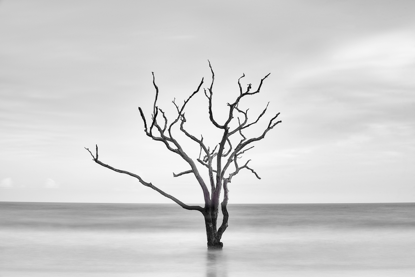 south carolina, edisto island, boneyard beach, black and white, simplicity, lone tree, beach, sand, sunrise, low country, botany bay plantation, photo