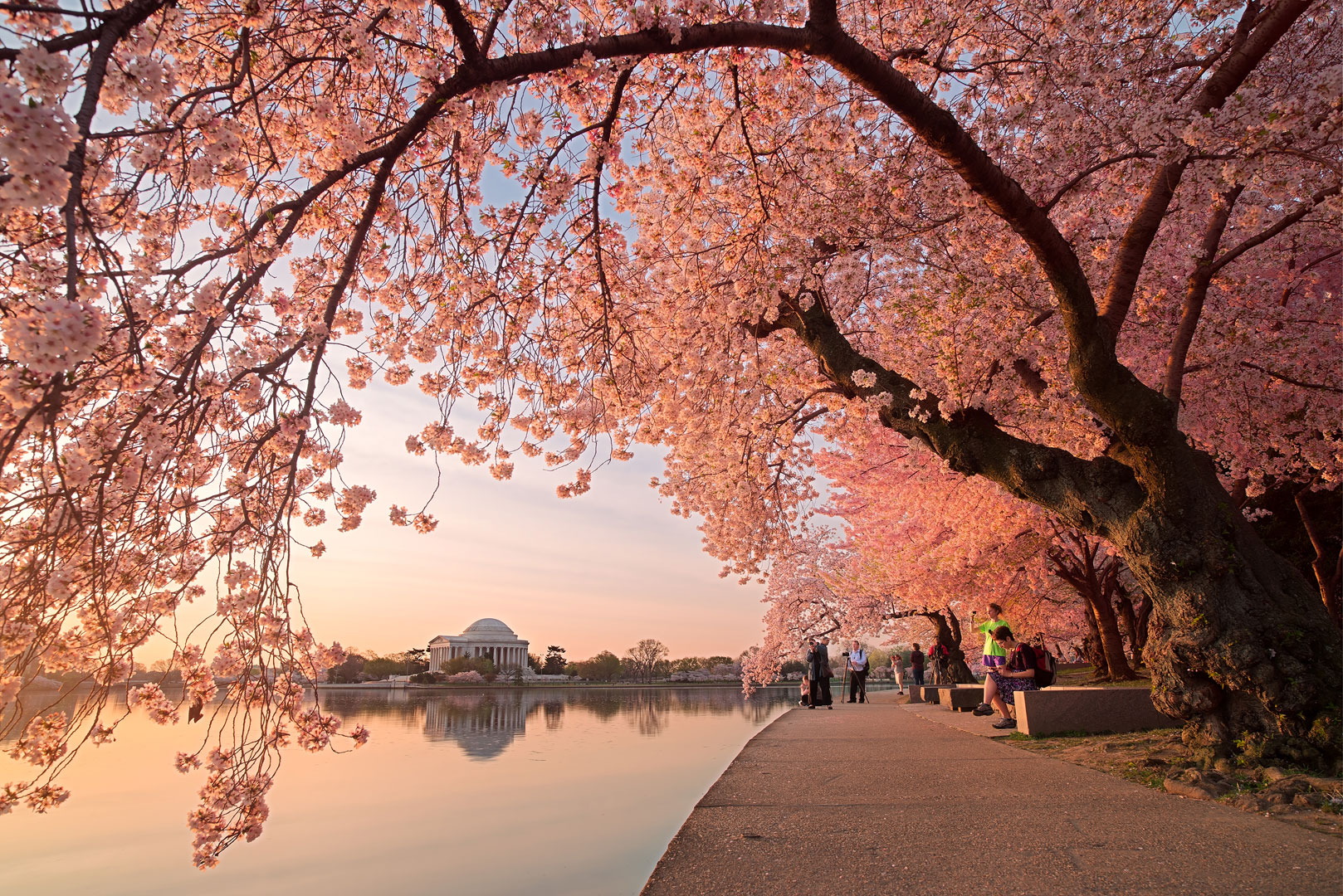 Spring Awakening, Washington DC, cherry blossom, blossoms, tidal basin, spring, april, pink, solitude, walkway, quiet, bernard chen, timescapes, photo