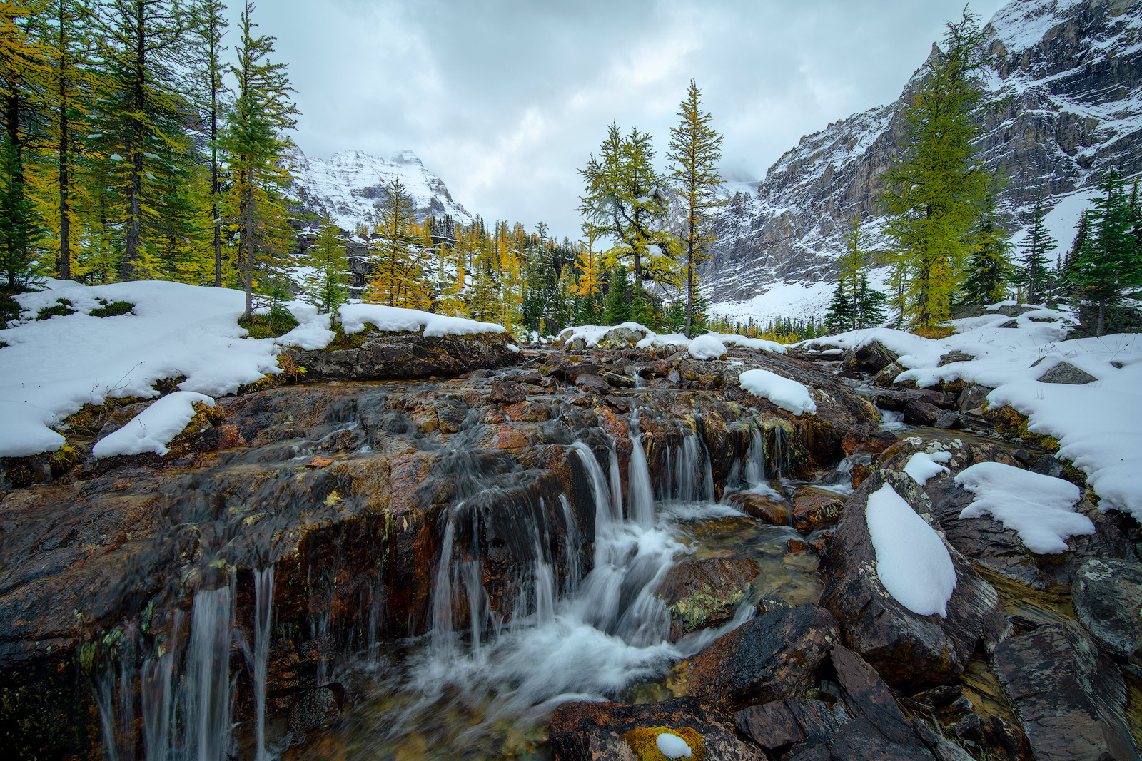 Wandering Soul of Lake O'Hara. Another fantastic find from our trek pass Lake O'Hara and up to the plateau. The scenes kept...